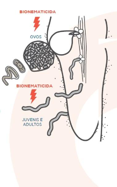 diagrama-bionematicida-indigo-soja